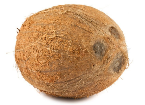 Picture of Dry Coconut (Large)