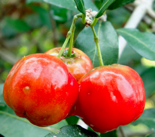 Picture of Cherry (1/2 lb/203g)